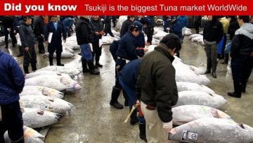 Did you know Tsukiji fish market in Tokyo is the biggest Tuna fish market in the world